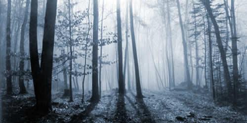 Bosque cubierto por la niebla
