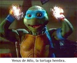 Venus, la tortuga hembra