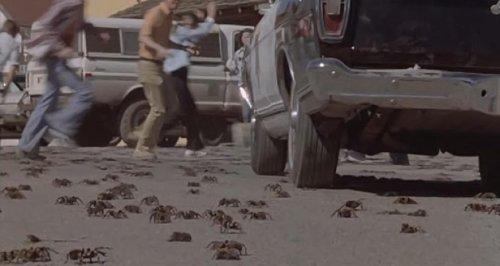 Tarántula (1977) - Invasión arácnida