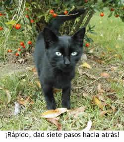 Gato negro malévolo